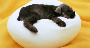 elegir cama para perro