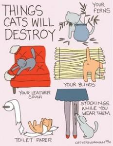 cosas que rompen gatos