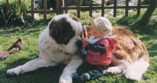 Perros celosos de bebés