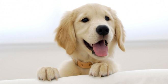 curiosidades perros