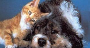 presentacion perro y gato