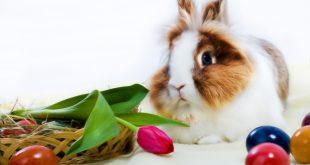 Cuidados para tu conejo