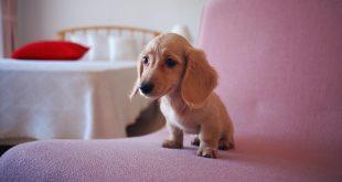 prepara tu casa para el perro