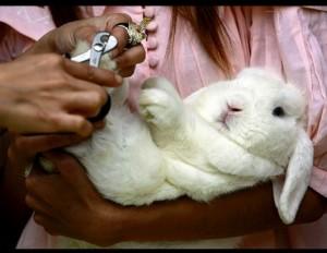 Cuidado de tu conejo