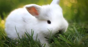 Conejo como mascota doméstica