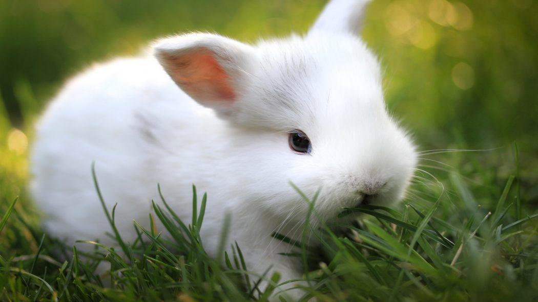 Mi conejo es el mejor 1982 threesome erotic scene mfm - 2 1