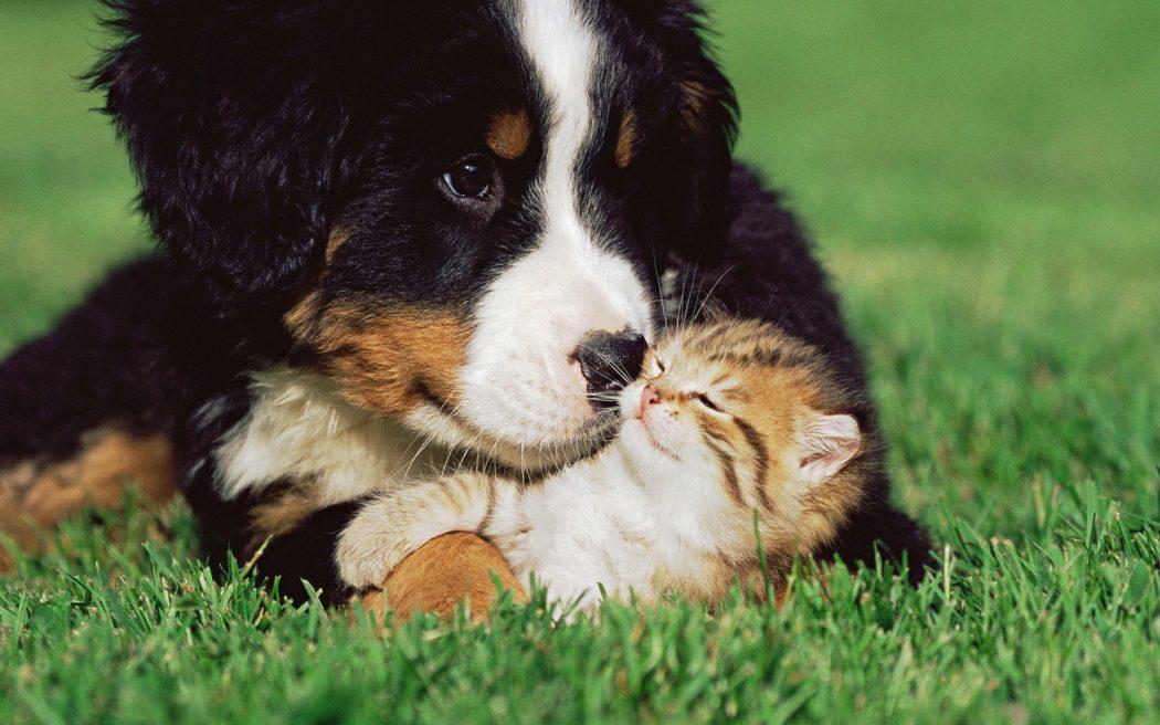 Perros y gatos muy cariñosos