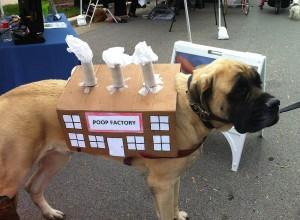 perro fábrica de caca