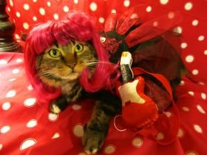 Especial Halloween, los mejores gatos disfrazados