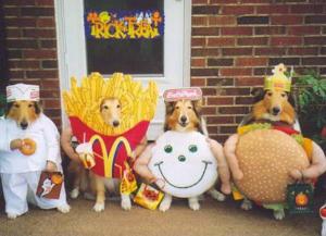 perros disfrazados de comida