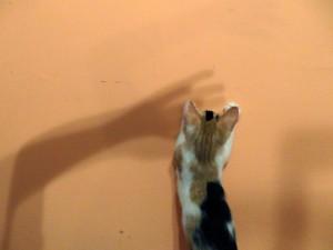 consejos para jugar con tu gato