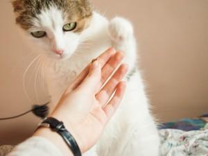 Jugar con tu gato con las manos