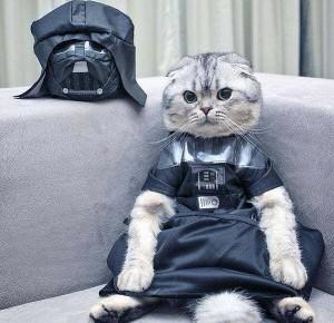 gato darth vader