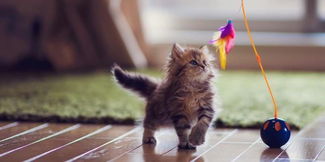 como jugar con tu gato