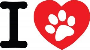 Amor entre perros y gatos