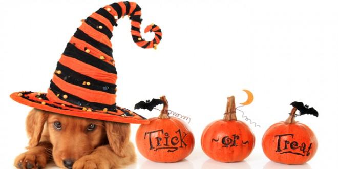 halloween perros disfrazados