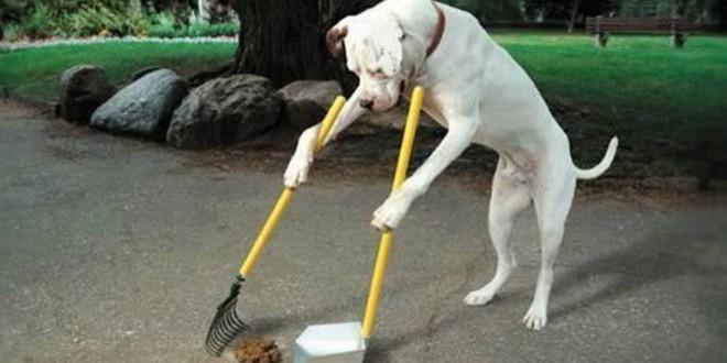 perro come heces