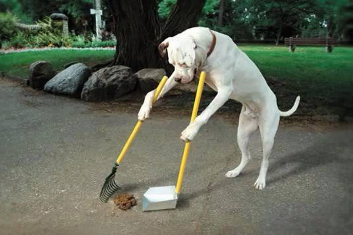 Consejos Para Evitar Que Tu Perro Coma Heces