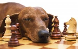 perro inteligente