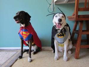 Perros superhéroes