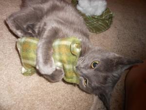 gato y catnip
