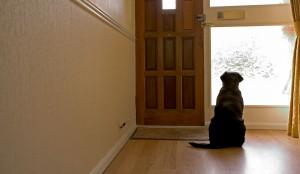 perro esperando ante la puerta