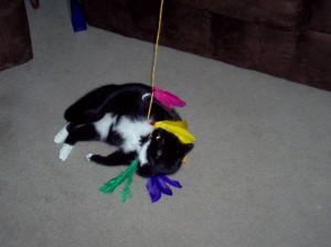gato y caña