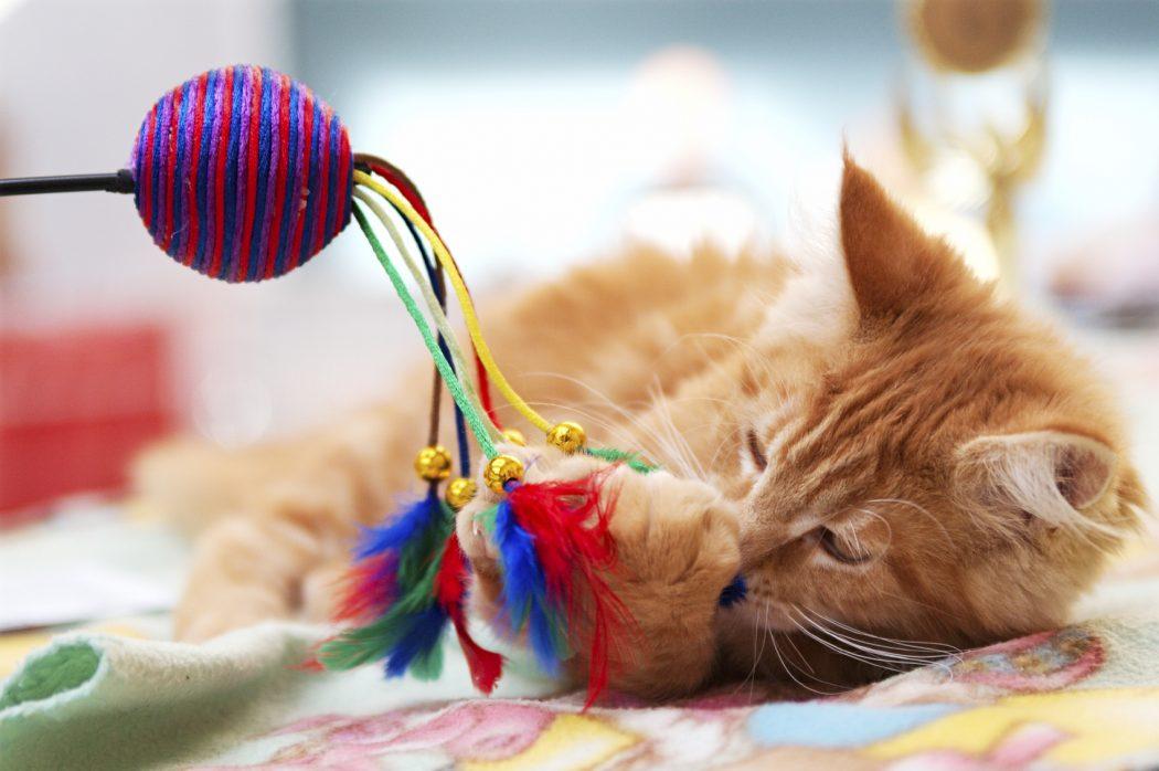 los mejores juguetes para gatos. Black Bedroom Furniture Sets. Home Design Ideas