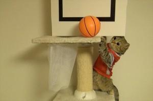 gato y bola