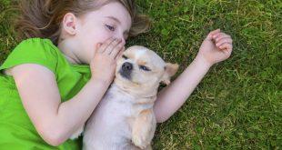 niños respeto animal