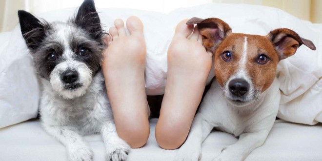 perros despertando a sus dueños