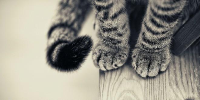 por que mueve la cola tu gato