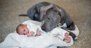 Pit bull y niños