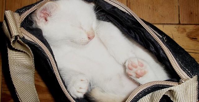 como elegir el mejor transportin para tu gato