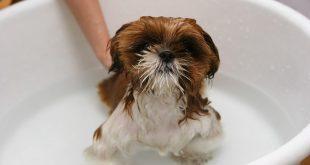 perros disfrutando del baño