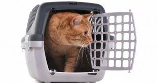 gato en su transportin