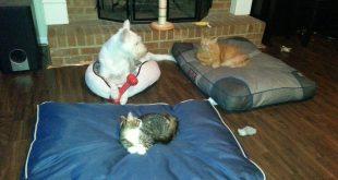 gatos robando camas de perros
