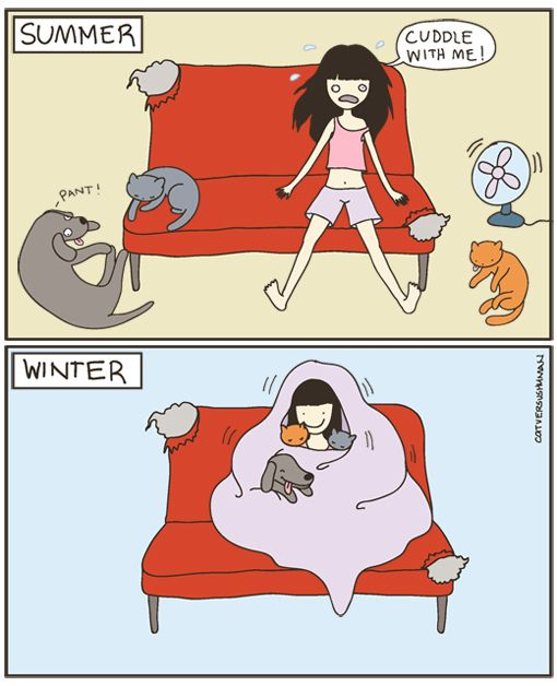 como cuidar a tu gato en invierno