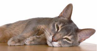 como curar heridas en tu gato