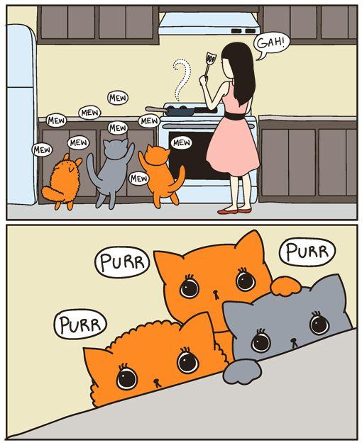 alimentos que no debes dar a tu gato