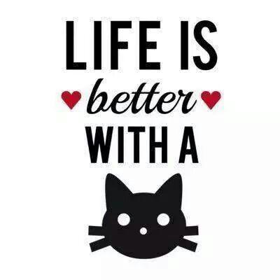 gatos y camas