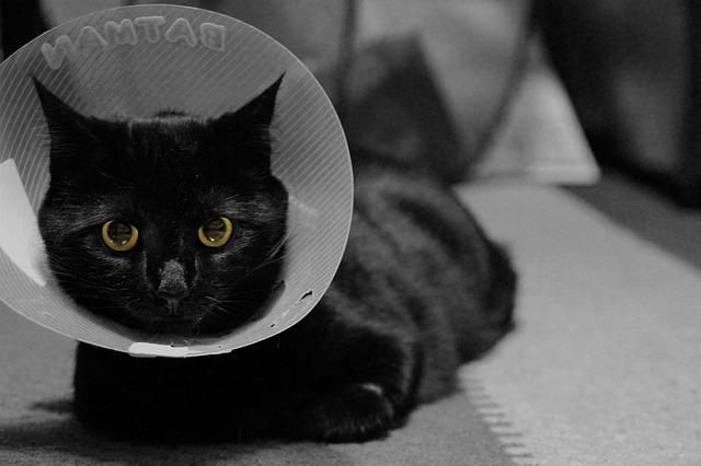 curar heridas a tu gato