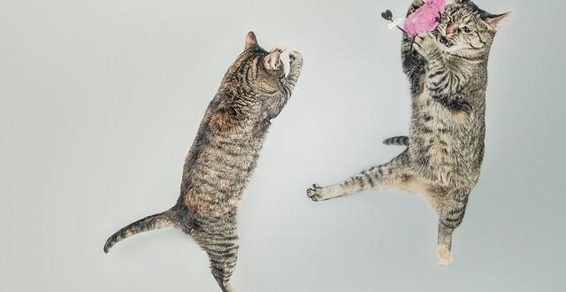 los mejores vídeos de gatos saltando