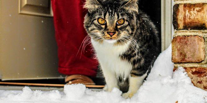 cuida de tu gato en invierno