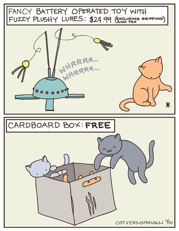 gatos y cajas historia de amor
