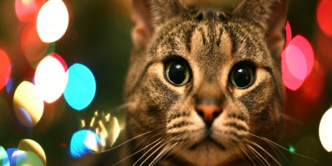 gatos y navidad