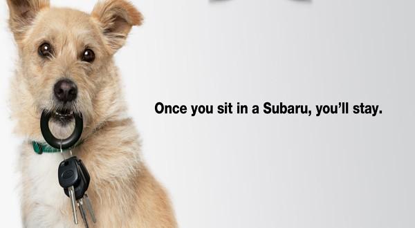 Los mejores anuncios de perros