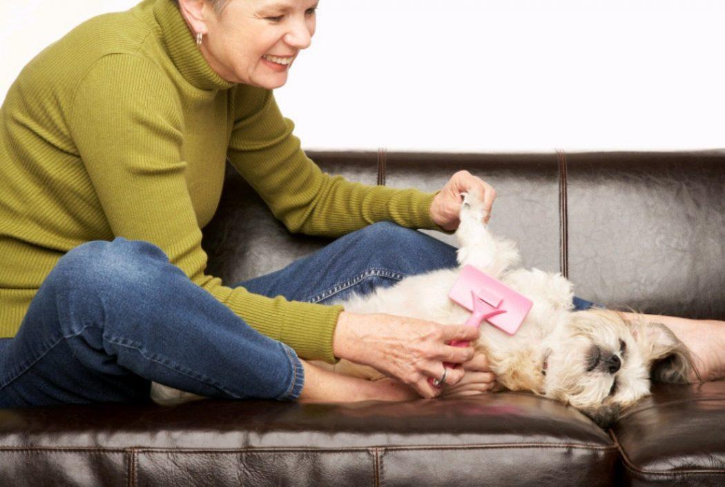 como quitar nudos al pelo de tu perro