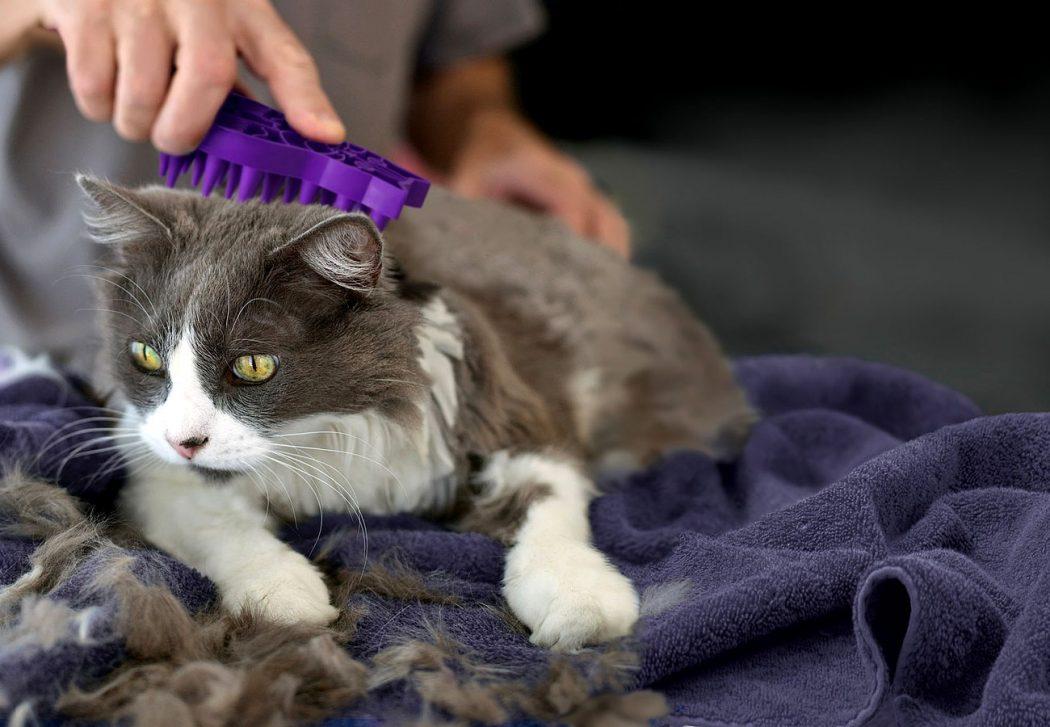 C mo quitar nudos del pelo de tu gato - Como quitar los pelos de gato de la ropa ...