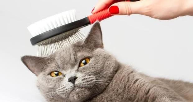 el mejor peine para tu gato